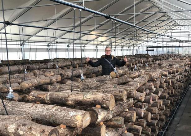 Pilze an Holz anbauen