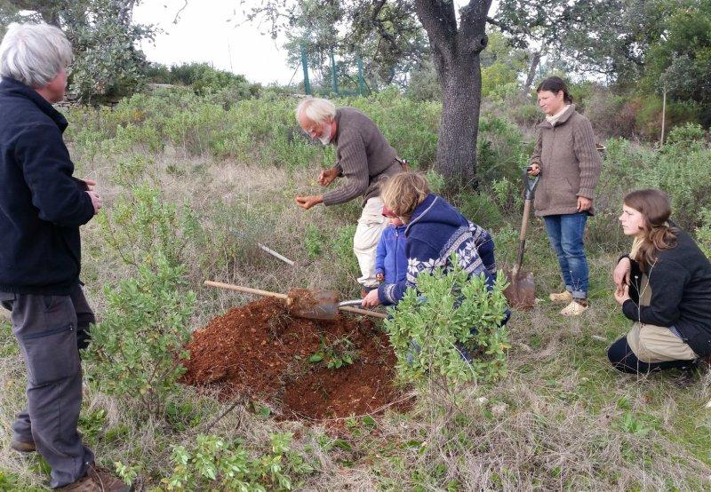Ansiedlung von Trüffeln an Altbäume