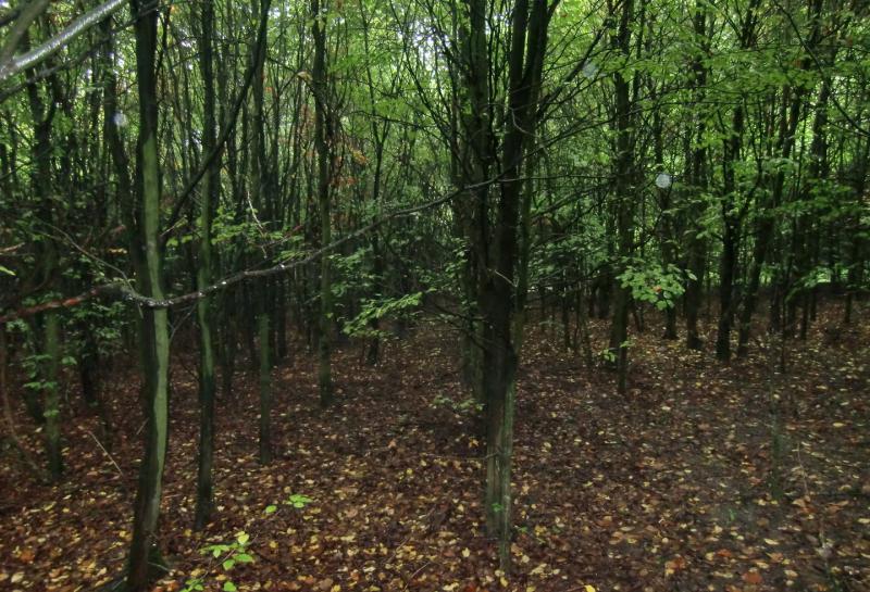 Trüffelgarten anlegen - von der Natur zur Kultur